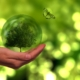 Pracownicy Pajmon CPT dbają o Błękitną Planetę