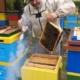 Leszek Szweda, pszczelarz z Żor włącza się do akcji firmy Pajmon