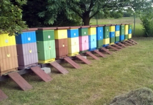 Łąki kwietne i pomaganie pszczołom - pracownicy Pajmon CPT mają to we krwi, a pszczelarz z Żor nam pomaga w naszej akcji