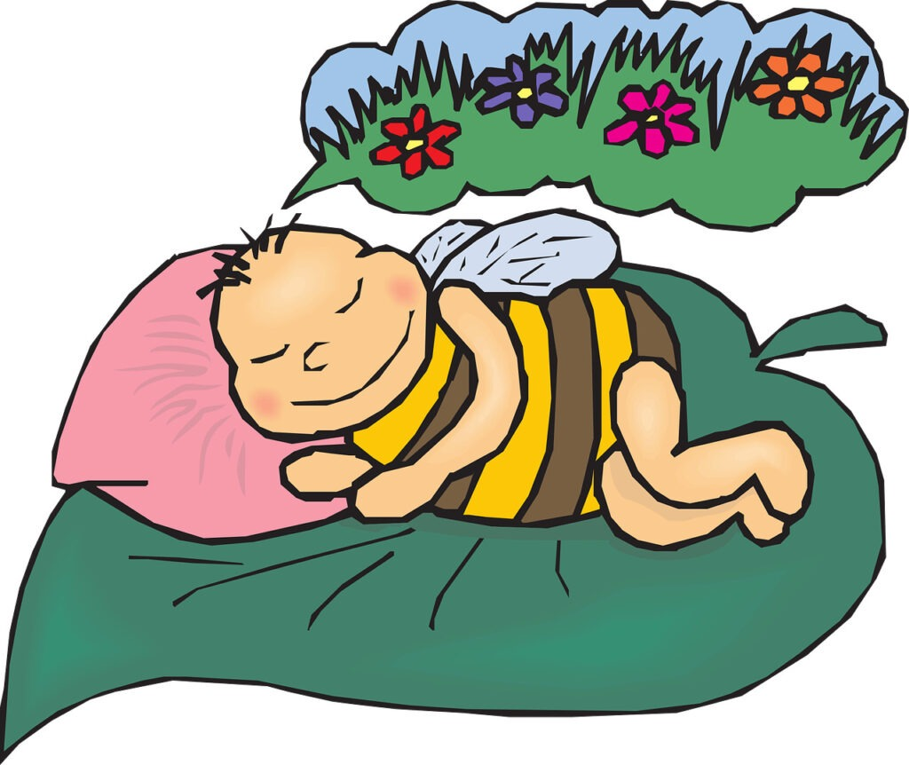Ratujemy pszczoły i sadzimy łąki kwietne