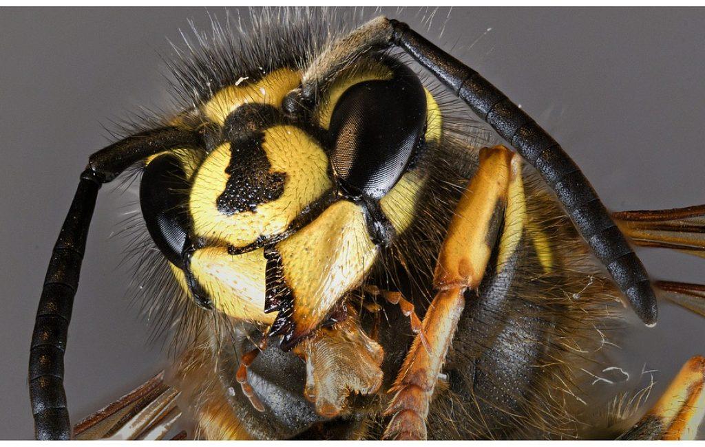 Żorskie pszczoły